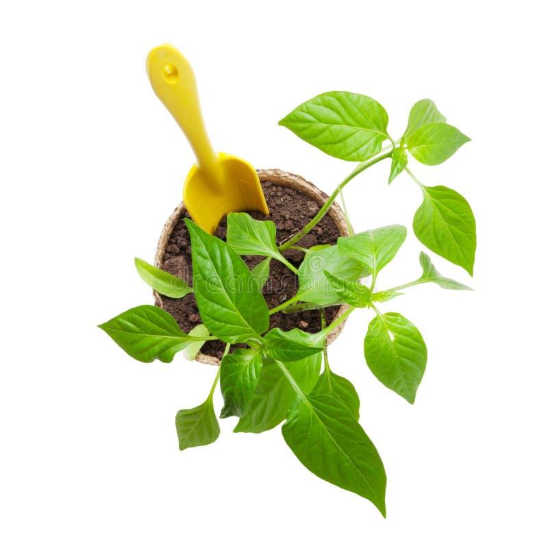 Gartenarbeitwerkzeuge und -s?mlinge lizenzfreie stockfotos