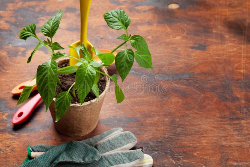 Gartenarbeitwerkzeuge und -s?mlinge lizenzfreie stockbilder