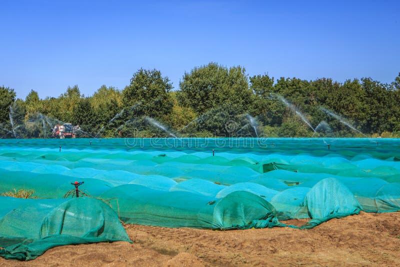 Gartenbau entlang der Loire lizenzfreie stockfotografie