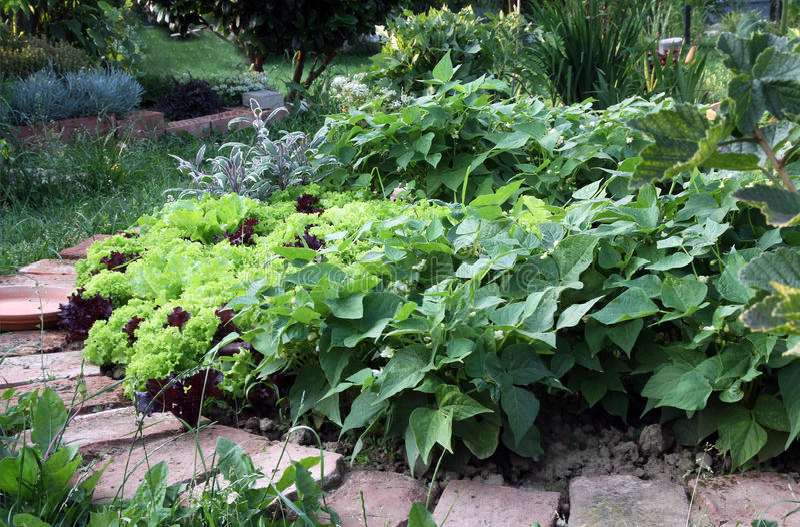 Gartenbett mit Mischkulturen lizenzfreie stockfotos