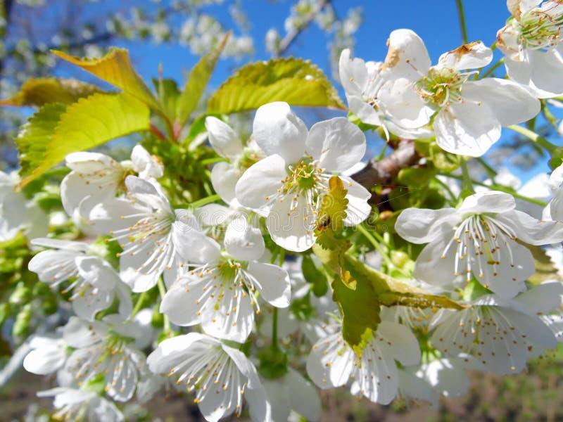 Gartenblüte lizenzfreie stockbilder