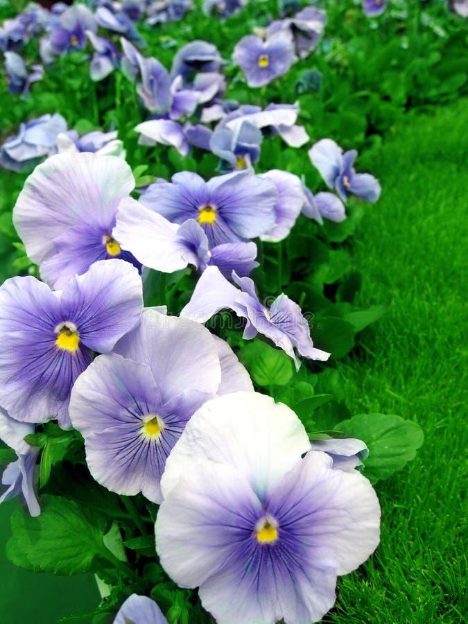 Gartenblumen lizenzfreies stockfoto