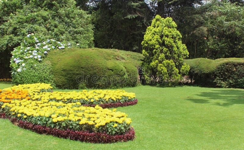 Gartenblumen mit Bäumen lizenzfreie stockfotos