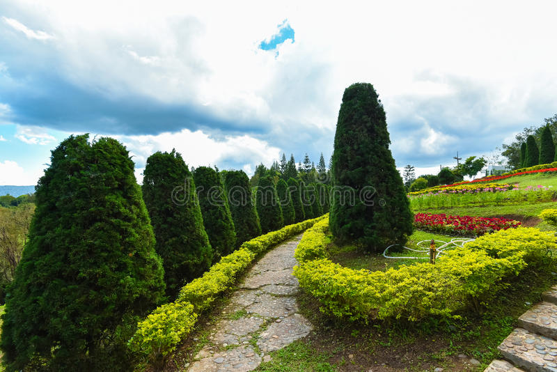 Gartenkiefer und -blumen stockbild