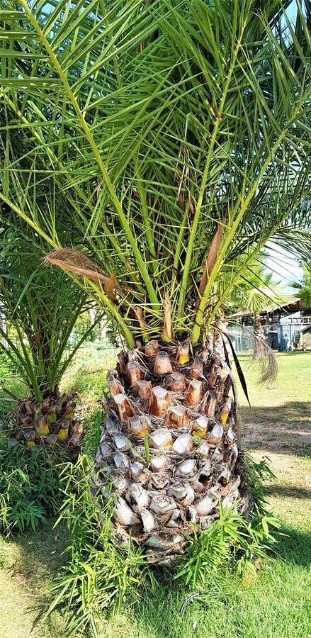 Gartenlandschaft mit palmtree in Kemer-Stadt, die T?rkei lizenzfreie stockfotos