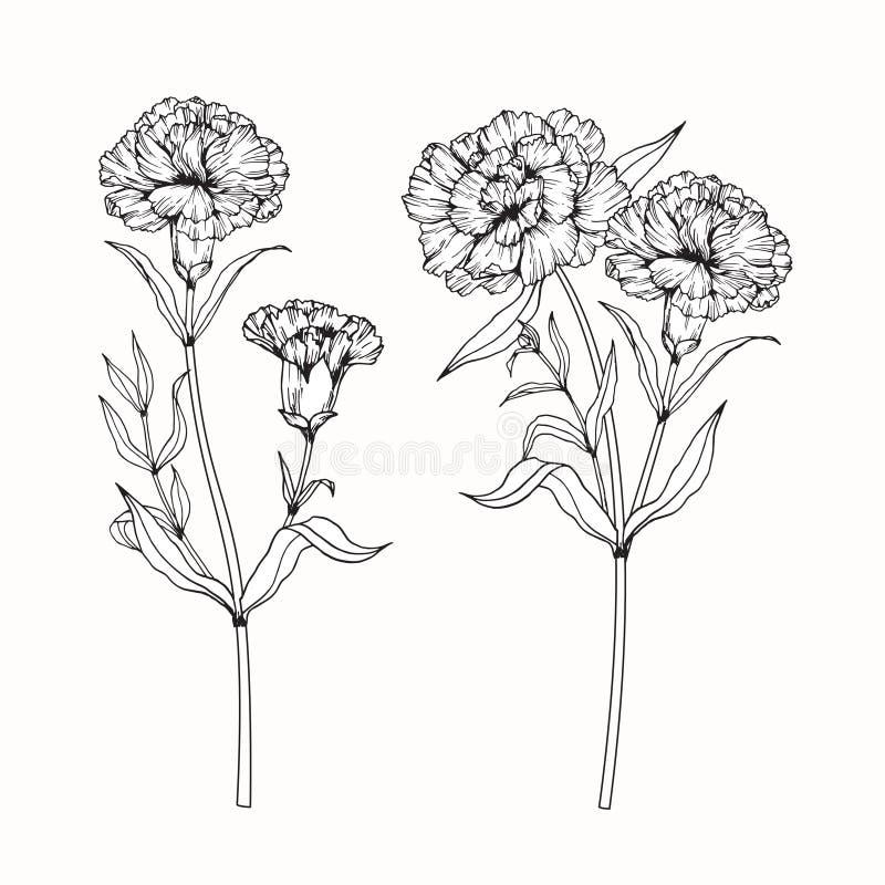 Gartennelke blüht Zeichnung und Skizze mit Liniekunst stock abbildung