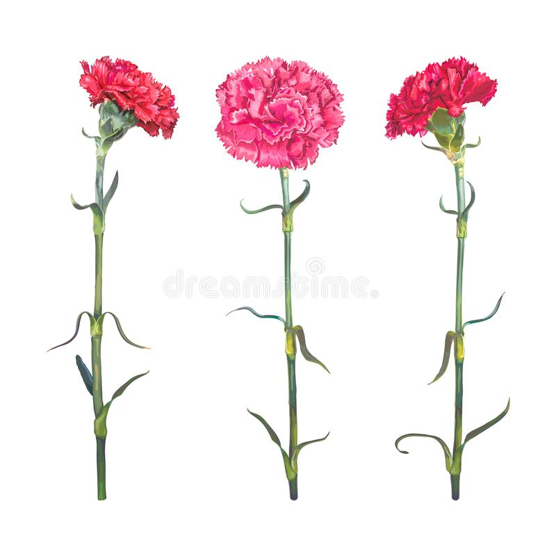 Gartennelke des Satz-drei vektor abbildung