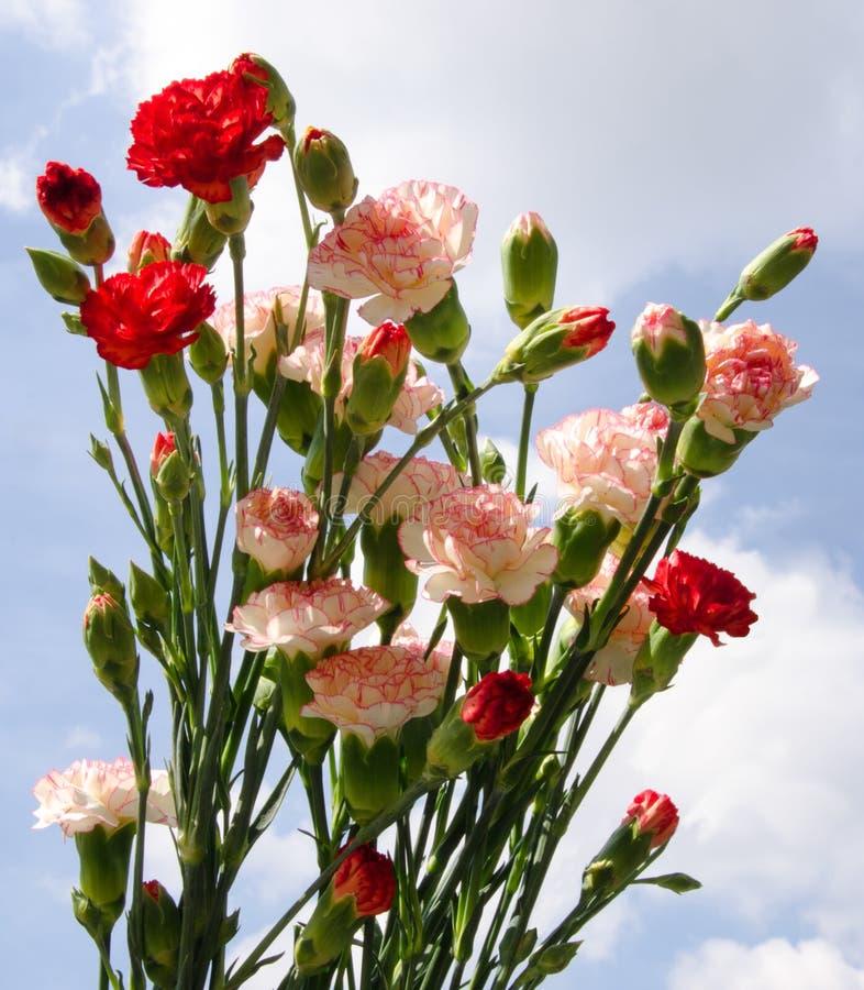 Gartennelken-Blumenstrauß stockbilder