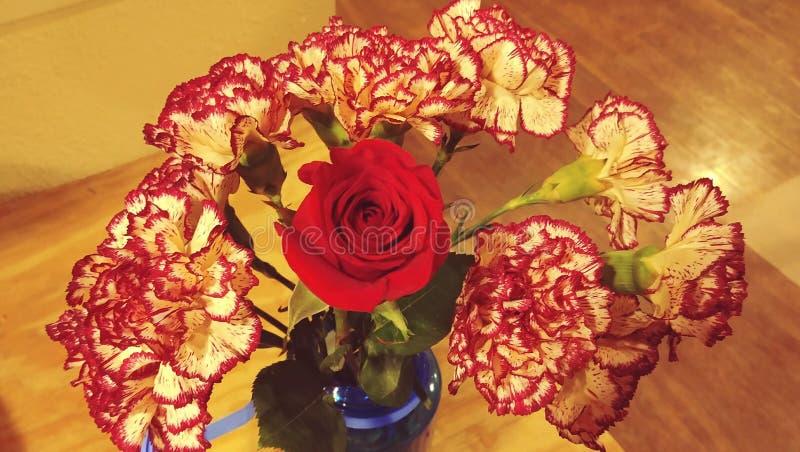 Gartennelken und eine Rose lizenzfreies stockbild