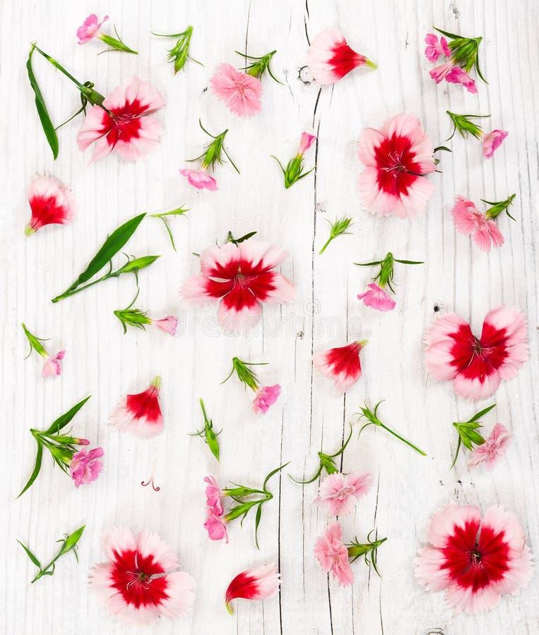 Gartennelkenblumen auf hellem rustikalem hölzernem Hintergrund lizenzfreie stockfotografie