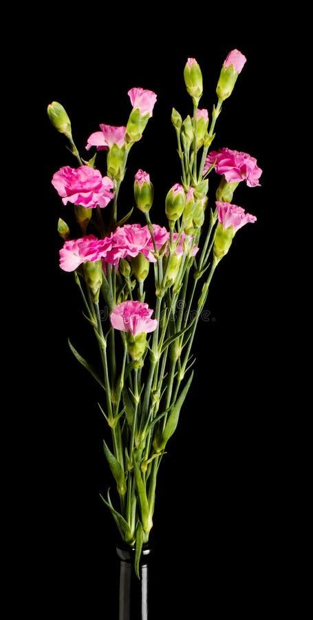 Gartennelkenblumenblumenstrauß auf dem dunklen Hintergrund lizenzfreie stockfotos