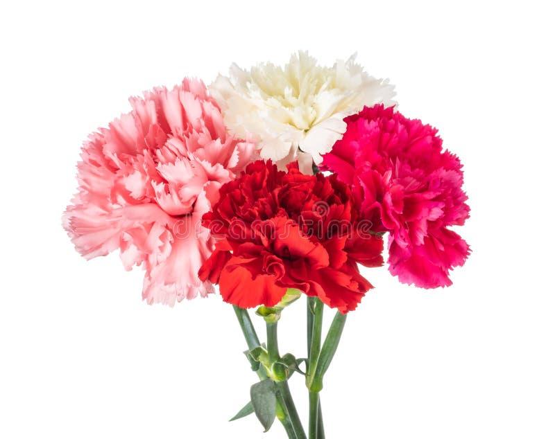 Gartennelkenblumenstrauß stockbilder