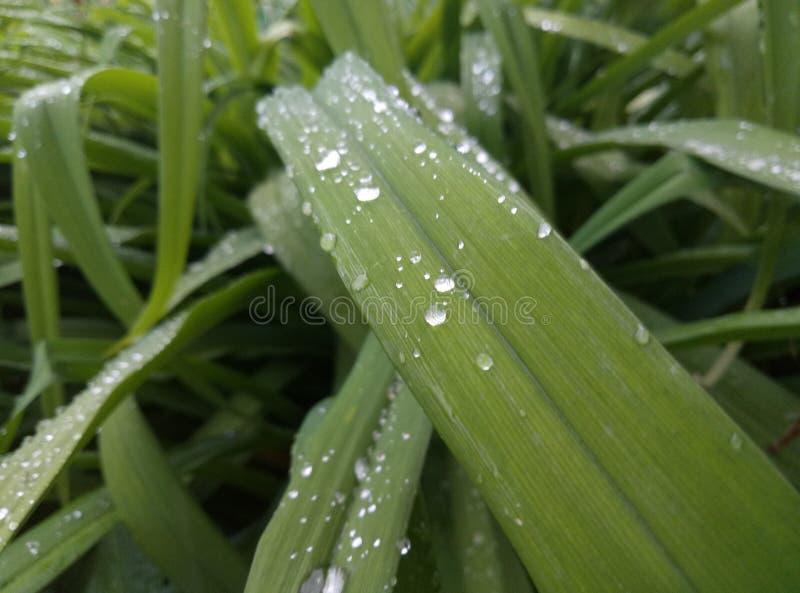 Gartenpflanzesommerabend stockfoto