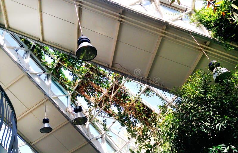 Gartenpflanzewindtorsions-Glasfenster in einem Gewächshaus Erhaltendes Orangeriegebäude lizenzfreies stockbild