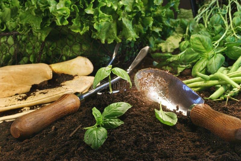Gartenthema mit Kopfsalat und Kräutern stockfotografie