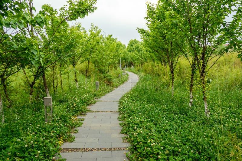 Gartenweg im Park lizenzfreies stockbild