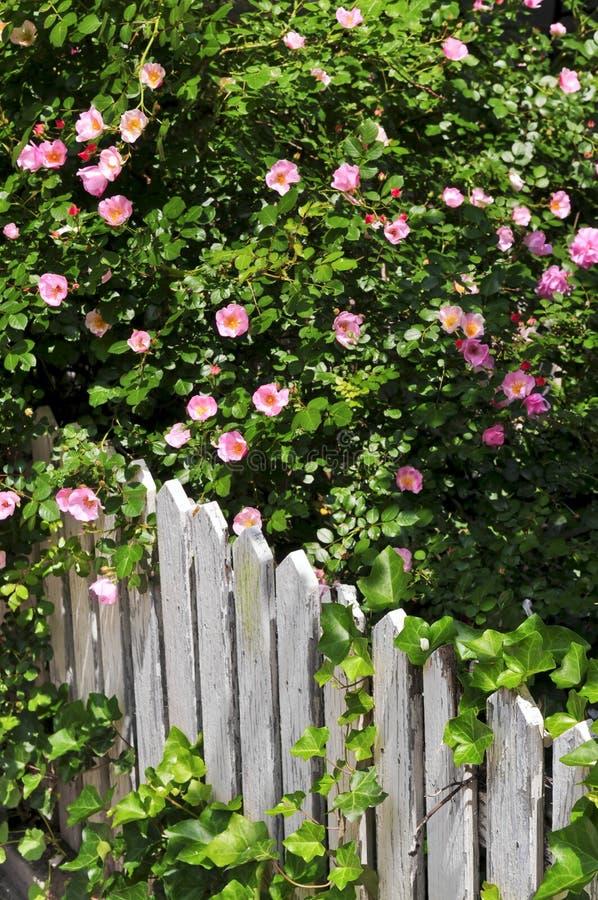 Gartenzaun mit Rosen lizenzfreie stockbilder