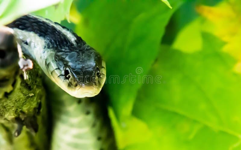 Garter Snake royalty free stock photography