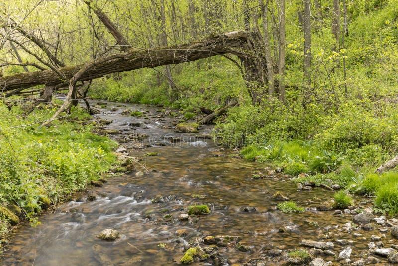 Garvin Brook In Spring immagine stock libera da diritti