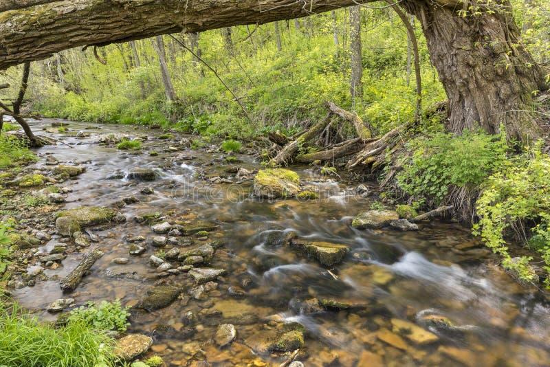 Garvin Brook In Spring fotografia stock libera da diritti