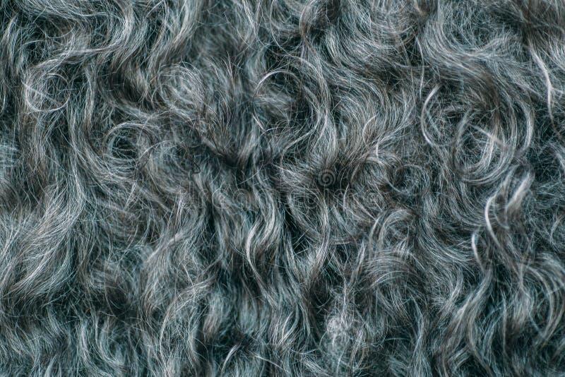 Gary ull texturerar bakgrund, bomull, grå färgullbeklädnaden, mörk fluffig päls, lockigt hår, makroskott royaltyfri bild