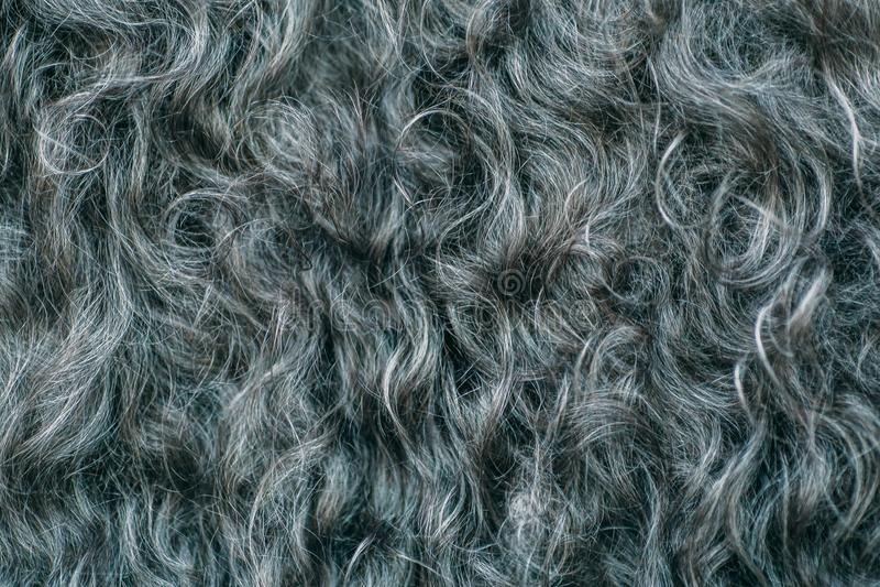 Gary-Wolle masert Hintergrund, Rohbaumwolle, graues Vlies, dunkler flaumiger Pelz, gelocktes Haar, Makroschuß lizenzfreies stockbild