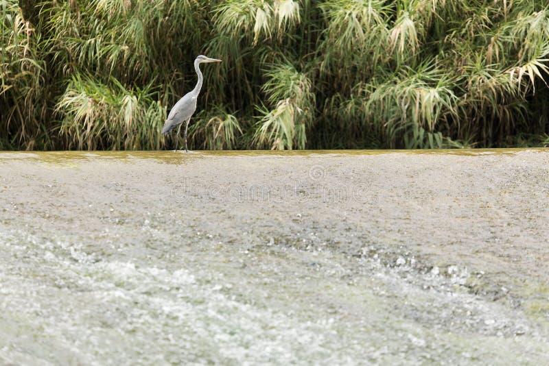 Garza Cuca no mundo do rio como passa através da cidade de L imagem de stock royalty free