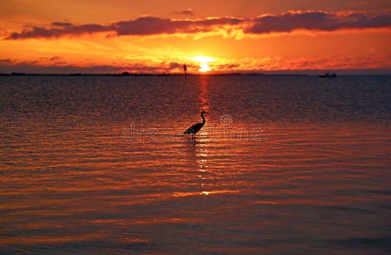 Garza y puesta del sol imagen de archivo