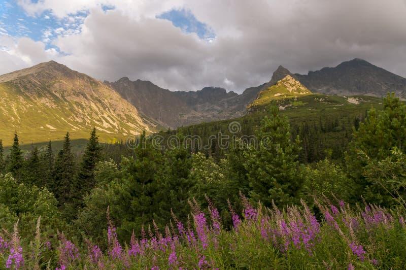 Gasienicowa谷在夏天 Tatra Moutans 波兰 免版税库存照片