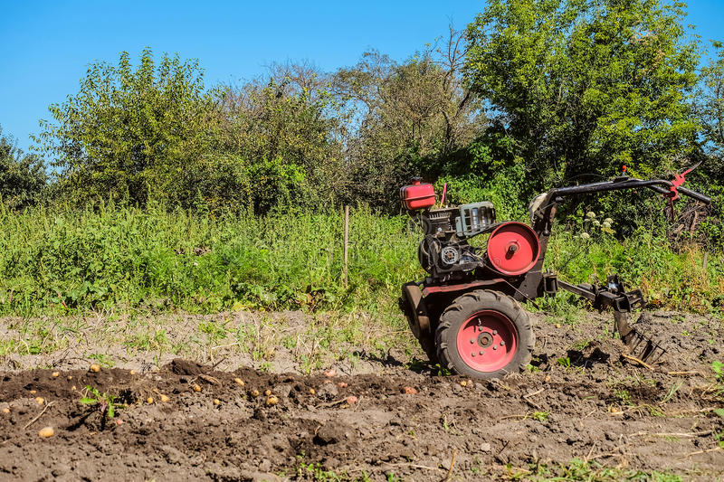 Gasoline motor cultivator near the furrow. Harvest of young potatoes royalty free stock image