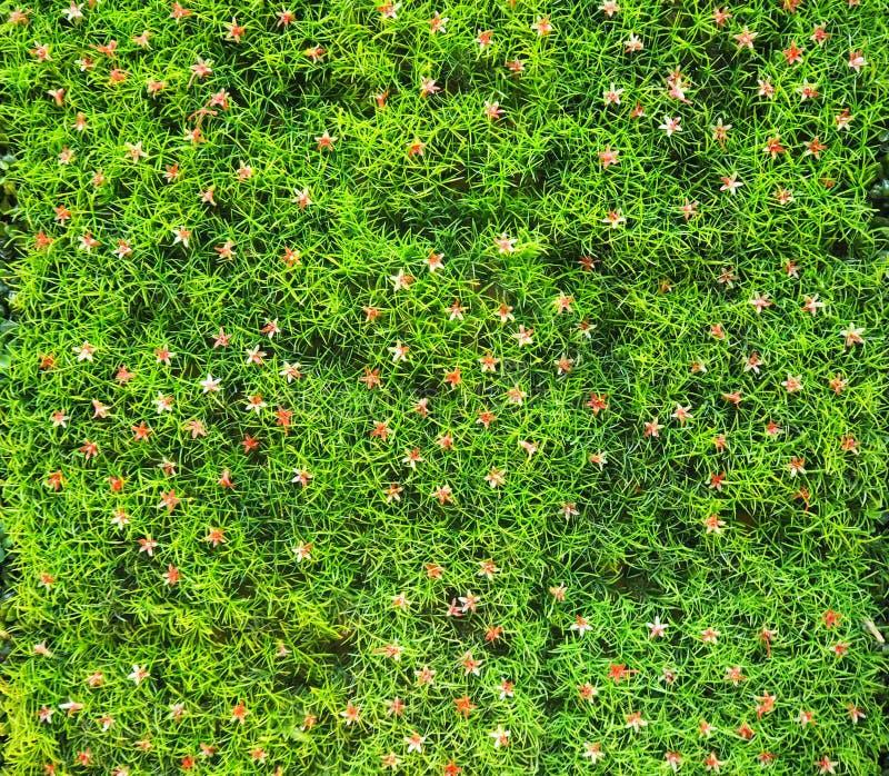 Gass artificiale con il piccolo fondo dei fiori fotografia stock