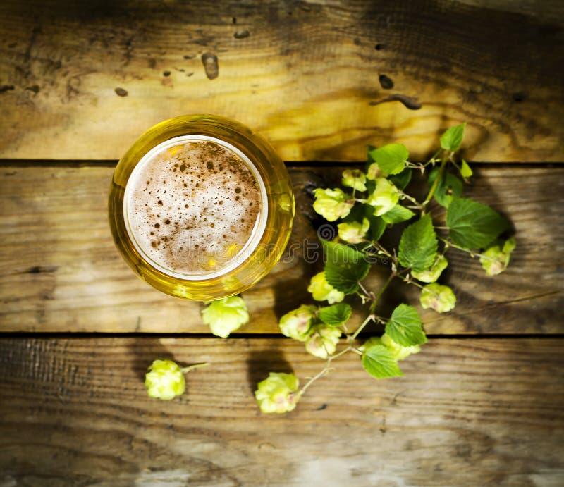 Gass de bière froide avec des houblon photographie stock libre de droits