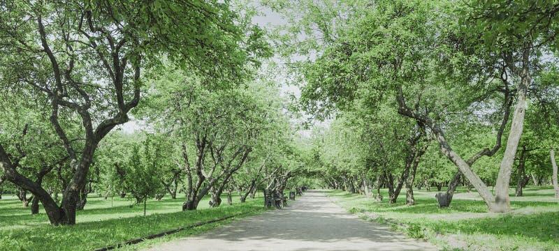 Gasse in einem alten Apfelgarten Landschaft für Reiseentwurf lizenzfreie stockfotografie