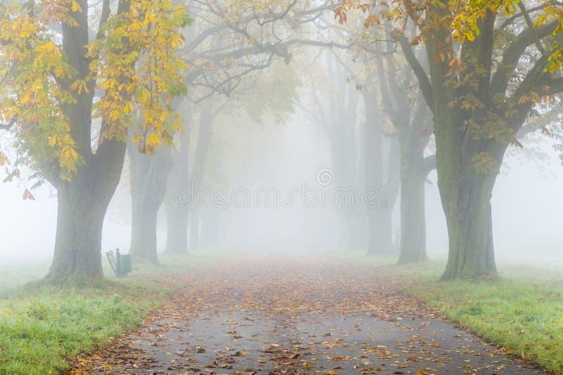 Gasse im Nebel mit Bäumen im Herbst lizenzfreie stockfotos
