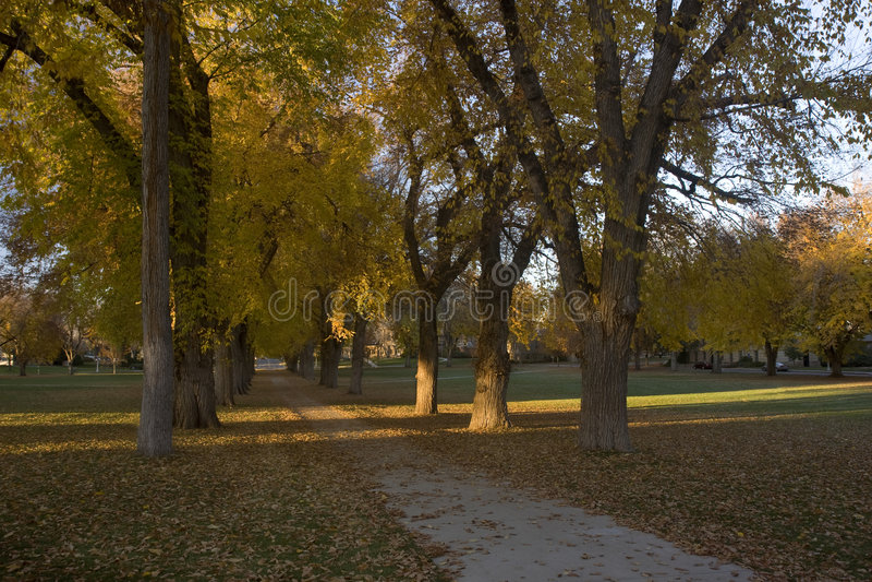 Gasse mit alten Bäumen der amerikanischen Ulme in den Fallfarben lizenzfreie stockfotografie