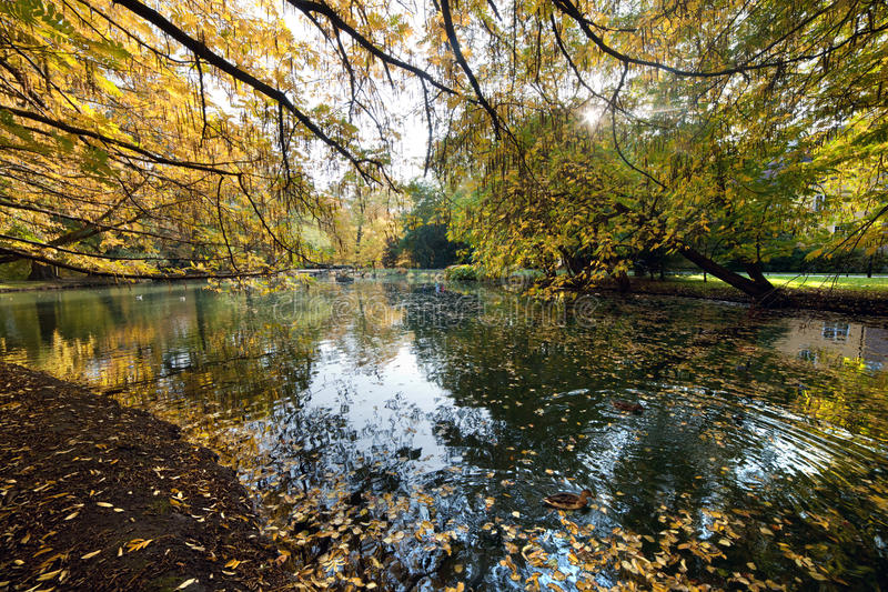 Gasse Mit Fallenden Blättern Im Fallpark Stockfotos