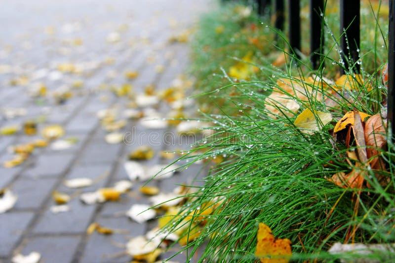 Gasse und Gras stockbilder