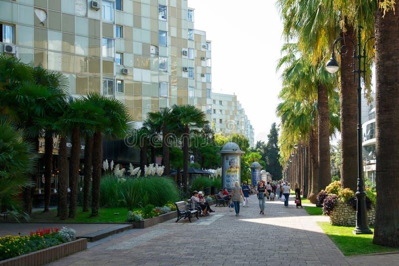 Gasse von Palmen in der Stadt von Sochi lizenzfreies stockfoto