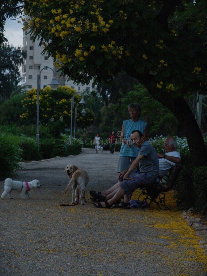 Gassenpark mit blühenden Bäumen der gelben Blumen auf der Seite, drei Leuten, die auf einer Bank sitzen und zwei Hunden stockfoto