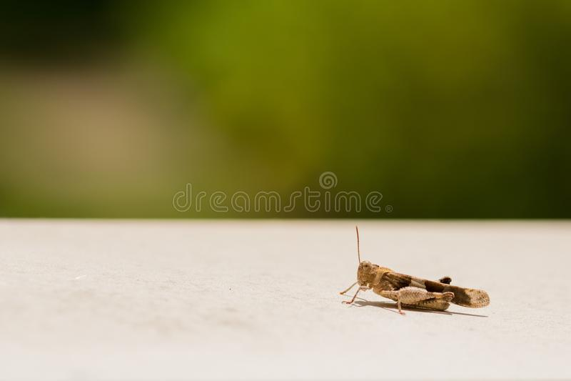 Gasshopper die op de richel rusten stock fotografie