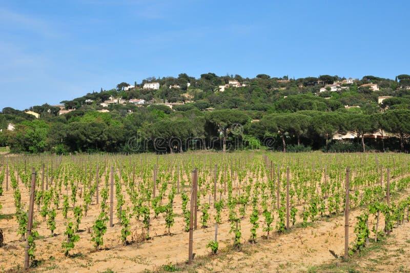 Download Gassin Frankrike - April 16 2016: Bertaud Belieu Gods Fotografering för Bildbyråer - Bild av utanför, vingård: 78730879