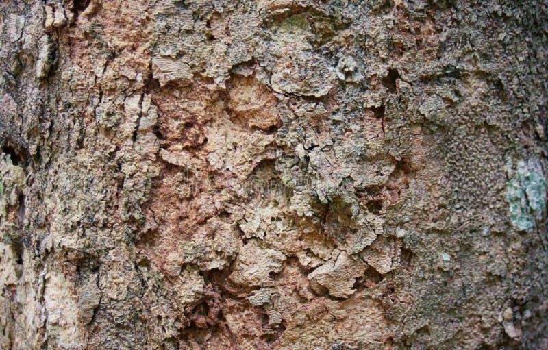Gasto de madeira natural velho do uso da textura da casca de árvore como vagabundos naturais imagens de stock