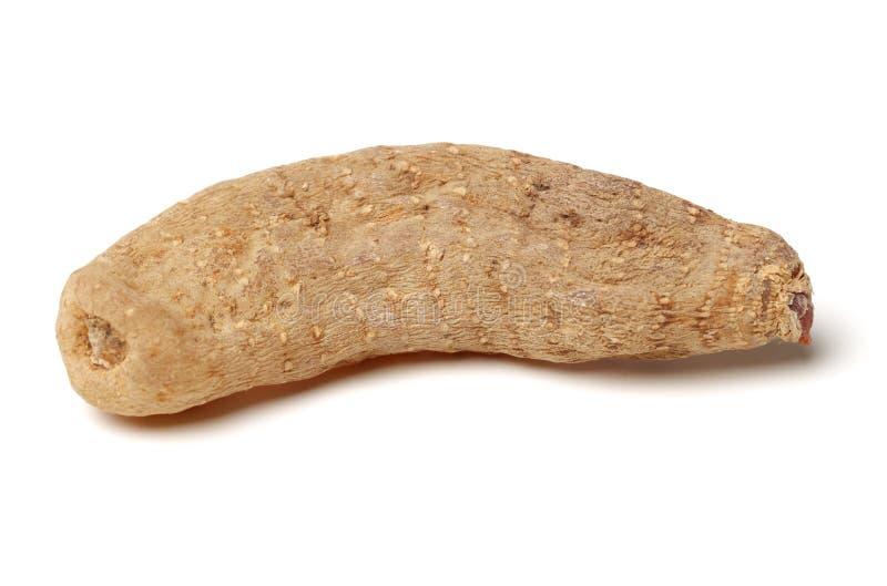 Gastrodia elata. On white background stock photo