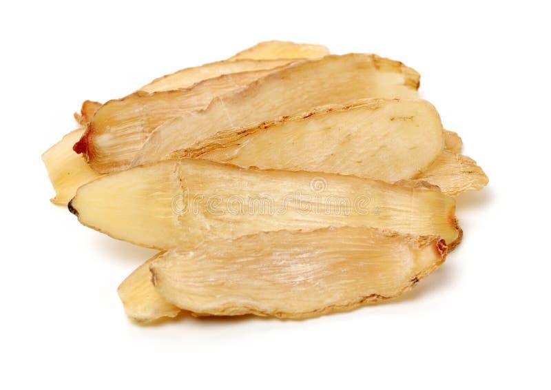 Gastrodia elata. On white background stock image