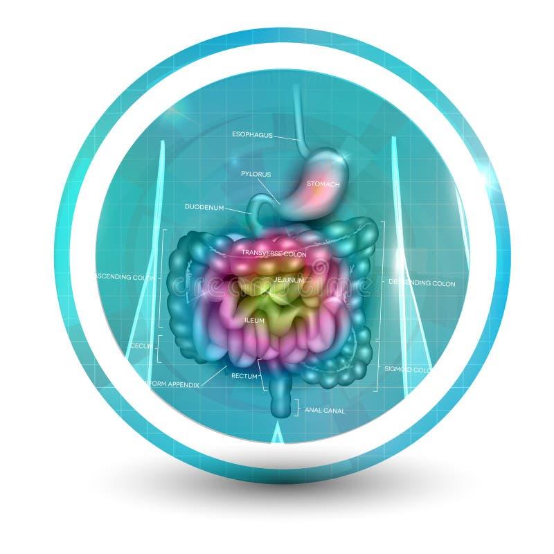Gastrointestinal obszaru ikona royalty ilustracja