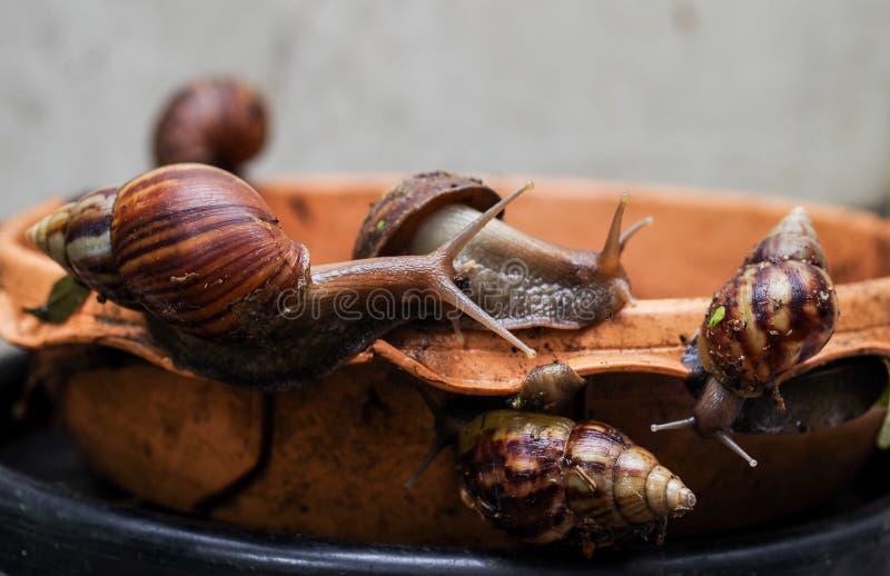 Gastropod. On earthenware dish in garden stock image