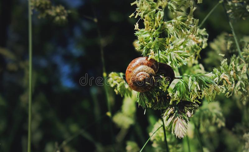 Snail eating on a plant in forest. royalty free stock images