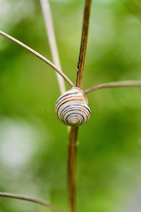 Gastropod shell. The gastropod shell is a shell which is part of the body of a gastropod or snail, one kind of mollusk stock image