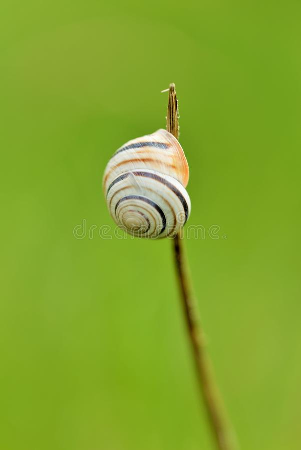 Gastropod shell. The gastropod shell is a shell which is part of the body of a gastropod or snail, one kind of mollusk stock photo