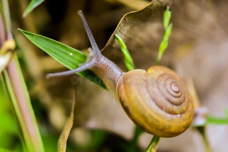 gastropode lizenzfreies stockfoto